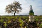 Pivo, jaro a Šacberk
